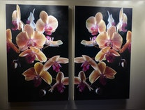 Photo of Orchids in 3D